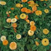KOLOMAN MOSER Ringelblumen, 1909 Marigolds Öl auf Leinwand Oil on canvas 50,3 x 50,2 cm Inv. 151