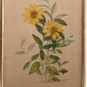 Pieter Withoos (Amersfoort1655 - 1692 Amsterdam) Staudensonnenblume (Heliantus Decapetalus), Aquarell auf Bütten,  Schätzpreis: 500,- Euro