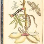 Merian, M. S. Over de Voortteeling en wonderbaerlyke Veranderingen der Surinaemsche Insecten. Amsterdam, J. Oosterwyk, 1719. Gr.-fol. (50:36 cm). Schätzpreis:50.000 EUR