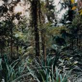 Lot 27 - Thomas Struth, Paradise 7, Daintree, Australia, 1998