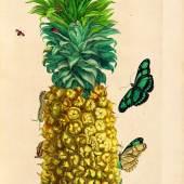 314 MARIA SYBILLA MERIAN Dissertatio de generatione et metamorphosibus insectorum Surinamensium. Den Haag, 1726. CHF 60 000 / 90 000