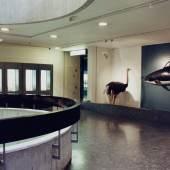 Candida Höfer, Zoologisches Museum Genf, 1989 Colour photograph, 35.5 x 51.2 cm Kunsthaus Zürich, Vereinigung Zürcher Kunstfreunde, Gruppe Junge Kunst, 1991, © 2019 ProLitteris, Zurich