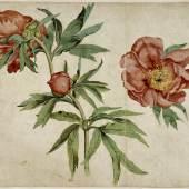 Martin Schongauer, (um 1445/50–1491) Päonien, um 1472/73 Aquarell auf Papier, 25,7 x 33 cm The J. Paul Getty Museum, Los Angeles © The J. Paul Getty Museum, Los Angeles
