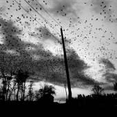 KOSOVO. Town of Pristina. 2000. Crows over the cemetery. © Paolo Pellegrin/Magnum Photos Copyright: © Paolo Pellegrin/Magnum Photos