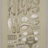 Gegenstände aus Perlmutt und Ovula-Schneckenschalen (680 KB) Neuguinea Otto Finsch, um 1885 Kolorierte Farbtafel, Papier auf Karton L. 275 mm, B. 180 mm Museum für Völkerkunde, Wien, Finsch-Objektblatt Nr. VIII