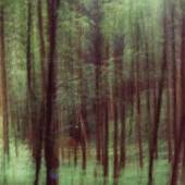 Bild 9: Ralf Bittner, Waldstück III, Fotoabzug auf Aluminium hinter Plexiglas, 2017; 75&100 cm. 1.200 €