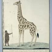 Robert Jacob Gordon, A Giraffe with a Khoi on the left, 1779. Collection Rijksmuseum