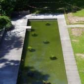 Das wiederhergestellte Seerosenbecken im Schlossgarten Schönhausen: Foto: SPSG