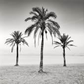 Arkadius Zagrabski   Three Palm Trees   2017   Fotografie