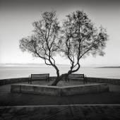 Arkadius Zagrabski   Two Benches and One Tree   2017   Fotografie