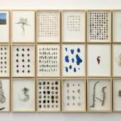 herman de vries, journal from a trip to immessouane, 2011, vegetation and mixed media on paper, 18 parts, each 35 x 25 cm  Image courtesy the artist and CONRADS (Düsseldorf)